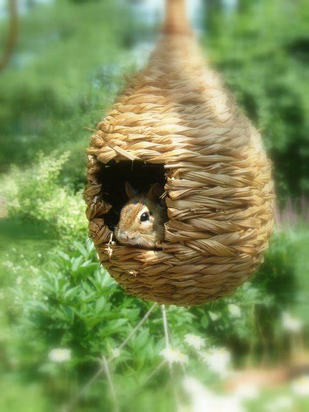 chipmunk house free stock photos rgbstock free stock images my little chippie sandralise