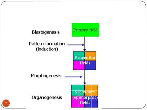 pattern formation determinant pattern formation