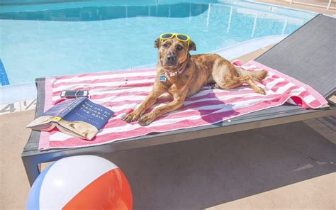 can dogs get sunburn can dogs get a sunburn by hilarious hound sf s pet photographer