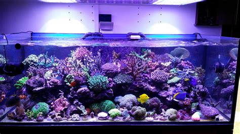 Led Aquarium Lighting this tank is truly one beautiful orphek