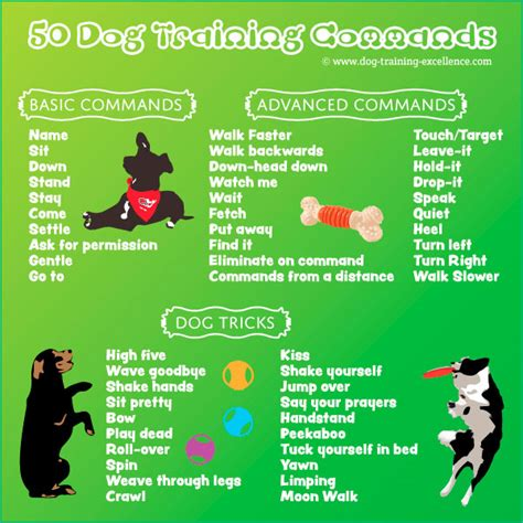puppy commands commands guide basic to advanced