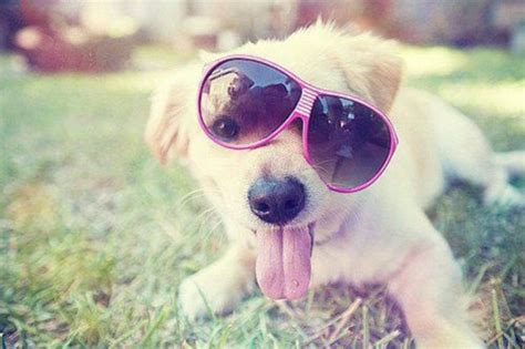 puppies wearing sunglasses 20 dogs wearing sunglasses