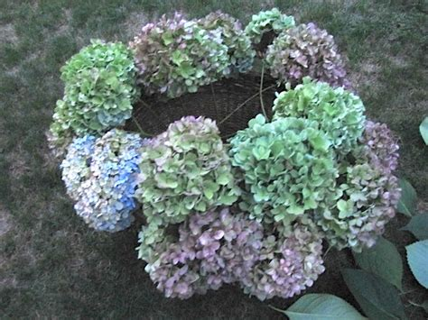 sew many ways drying hydrangea