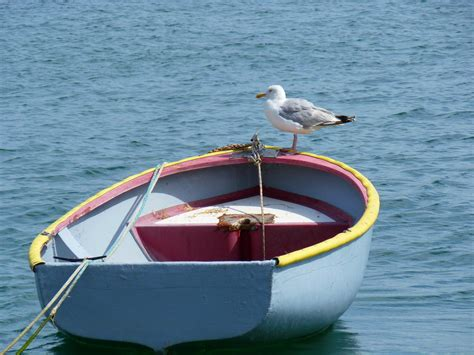 water dinghy boat free images sea water nature outdoor bird wood