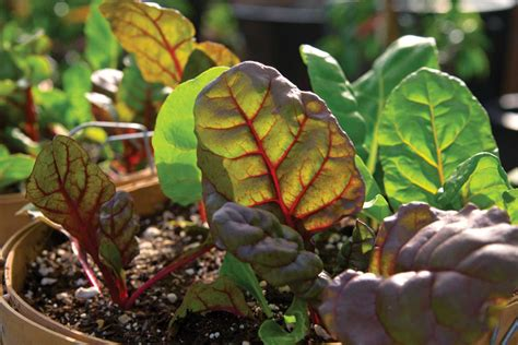 fall gardening plants fall gardening what to plant in your region now