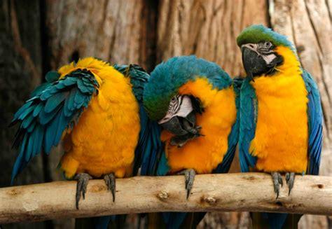world of birds city sightseeing