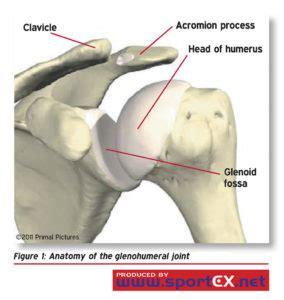 dolore interno spalla conflitto sub acromiale dolore la spalla medicina