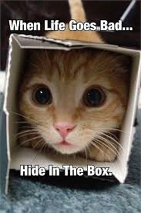 Bad Kitty Meme - when life goes bad cat meme cat planet cat planet