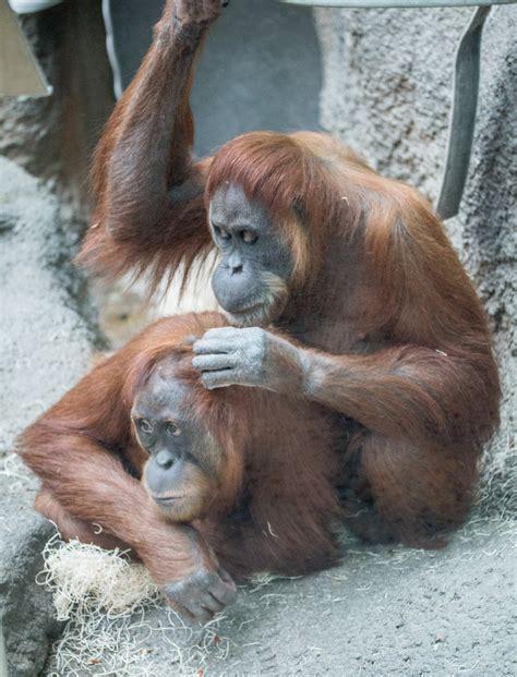 animals having with humans america s best lifechangers