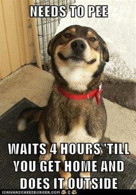 Memes About Dogs - funny dog memes the ultimate collection dog training