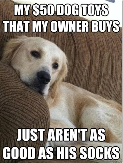 Orange Dog Meme - 20 hilarious dog memes