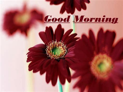 wallpaper flower good morning good morning images with flowers full hd flower inspiration
