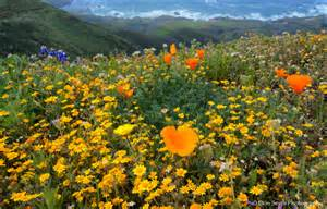 spring wildflowers big sur coast landscape amp rural photos don smith photography blog