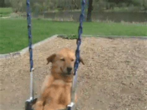 Swing Gif by Giphy Gif