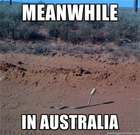 Funny Australia Day Memes - meanwhile in dump a day