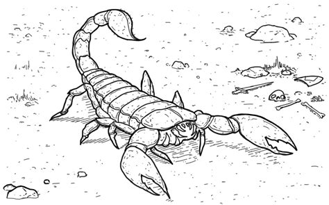 Scorpion Coloring Page Free Coloring Pages Of Scorpion Drawn by Scorpion Coloring Page