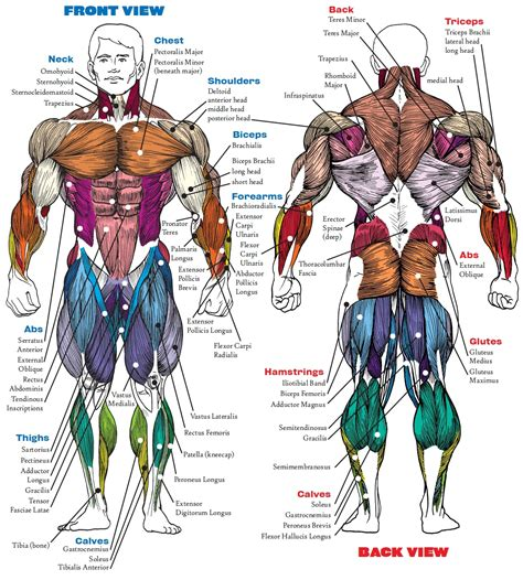 anatomy book with cadaver pictures anatomy bodybuilding book anatomy book human