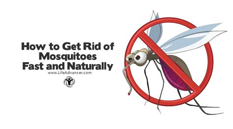 how to get rid of mosquitoes how to get rid of mosquitoes fast and naturally