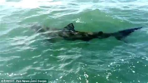 boat covers norfolk fishermen stunned when 12ft shark swims past in norfolk