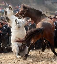 Chinese ignore critics to pitch horses into battle at annual festival