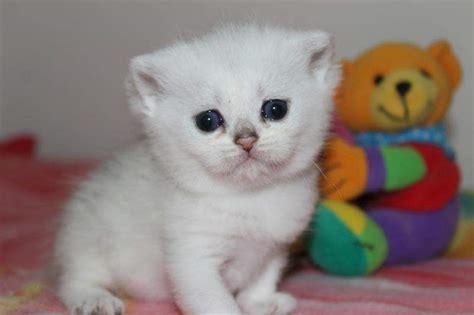 cani per casa e gatto in casa animali in casa e gatto giocano