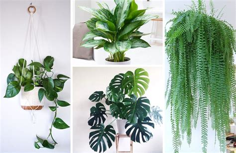 the best house plants the best indoor houseplants how to care for each 11 display ideas