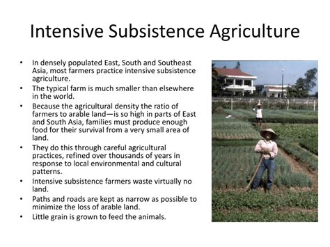 extensive subsistence agriculture by priscilla lagunas infographic