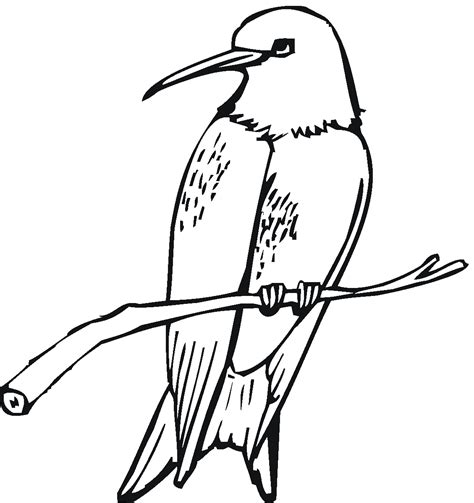 hummingbird coloring page free printable hummingbird coloring pages for kids