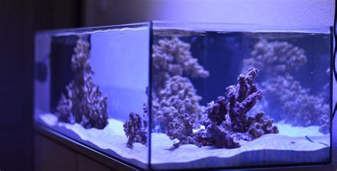 marine aquarium led lights the best led lights for growing coral in the marine