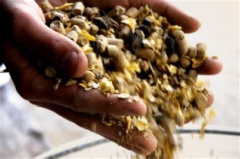 alimentazione animale piano di controllo per l alimentazione animale per l anno
