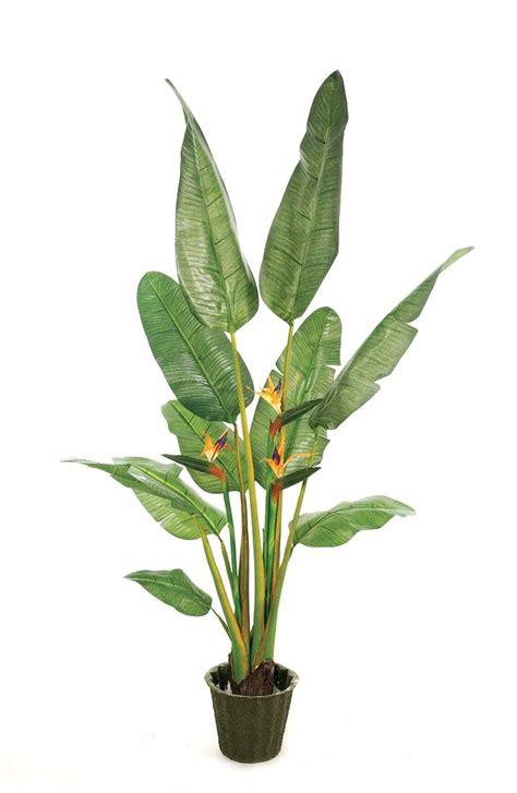 indoor house plants low light tropical plant prop pinterest tropical plants
