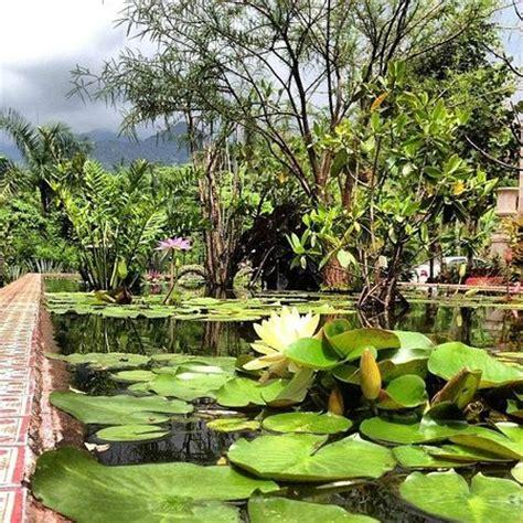 Vallarta Botanical Gardens by Water Plant Pond Picture Of Vallarta Botanical Gardens Vallarta Tripadvisor