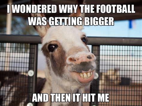 Animal Pun Memes - funny animal memes puns