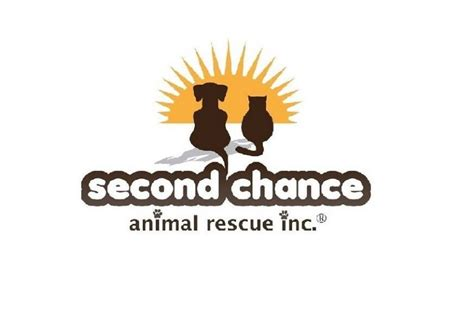 the fast and the furriest second chance cat mystery books s c a r animal shelter project chuffed non profit