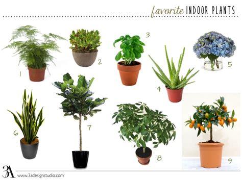 favorite indoor plants  design studio