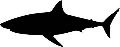 white silhouette great white shark silhouette free vector silhouettes