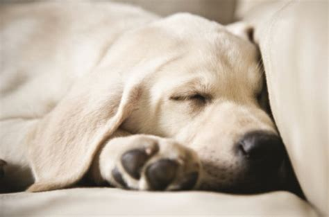 how often to worm puppies how often should i worm my