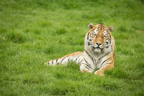 Big Cats Photography Experie E Lastminute M