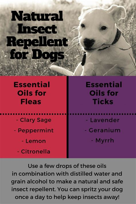 flea and tick repellent for dogs 1000 ideas about flea repellant on fleas