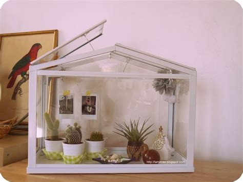 verriere interieure 334 mini serre cactus d 233 coration diy and