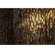 Tree Bark Wallpaper 49764