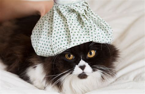 wie lange schlafen katzen wie lange schlafen katzen tierischehelden de