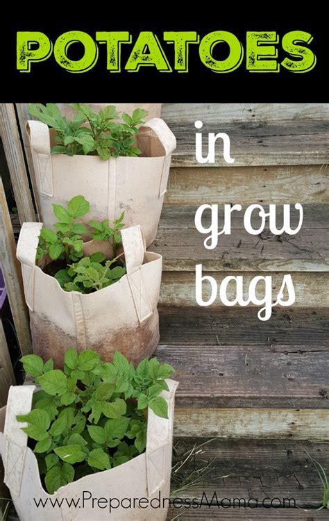 potatoes  grow bags preparednessmama
