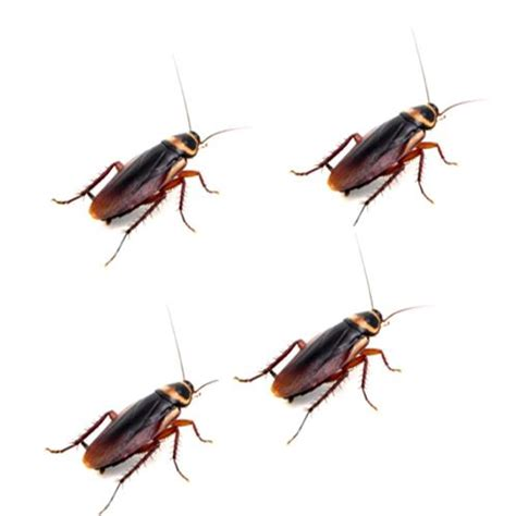 water bugs in house water bugs in house how to get rid 28 images how to get rid of waterbugs bob vila