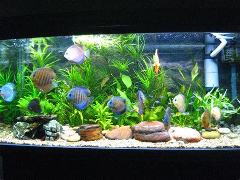 aquarium le meilleur aquarium de 28 images meilleur prix acrylique