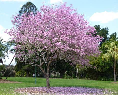 Pupuk Daun Bunga Hias tanaman hias dan harganya mediatani