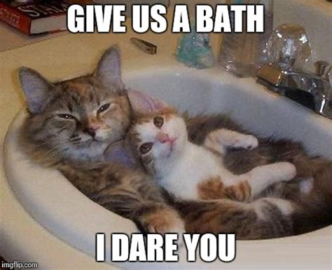 Bath Meme - cats in sink imgflip