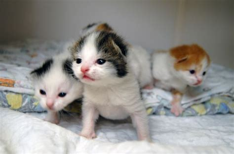 Litter Of Kitties by Litter Of Four Kittens Rescued From Dumpster With Cats