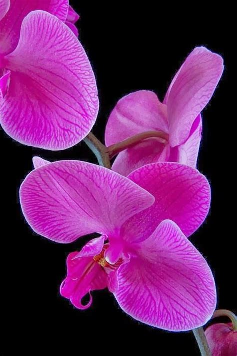 color orchids pantone color of 2014 radiant orchid the room