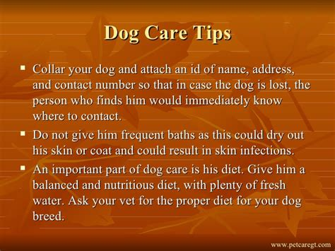 Care Tips 3 by Pet Care Tips